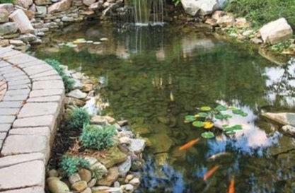 Pond-5-resized